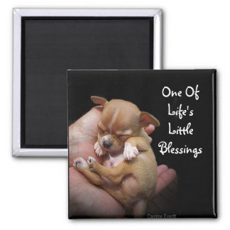 Enjoy Life's Little Blessings Magnet