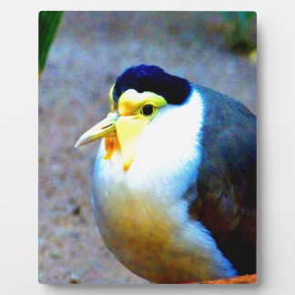 Enjoy peace and love bird plaques