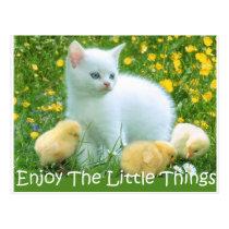 Enjoy The Little Things Cute Animals Postcard