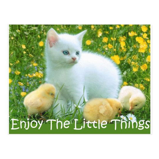 Enjoy The Little Things Cute Animals Postcard