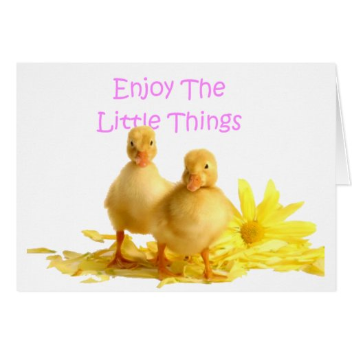 Enjoy The Little Things, Ducklings Card