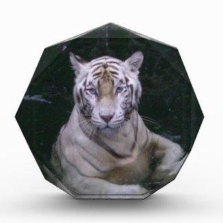 Enjoying peace and calm Bengal tiger Acrylic Award