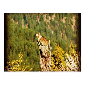 """Enjoying the View"" Squirrel Postcard"