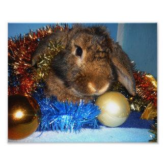 Enlargings photo Christmas Rabbit