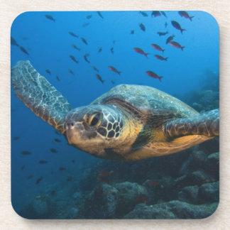 Ennegrezca la tortuga (verde) (agassizi del Chelon Posavaso