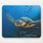 Ennegrezca la tortuga (verde) (agassizi del Chelon Tapete De Raton