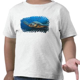 Ennegrezca la tortuga (verde) (agassizi del camisetas