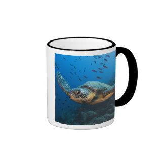 Ennegrezca la tortuga (verde) (agassizi del taza de dos colores