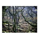 Ennegrezca un Copse del Tor, Dartmoor, Devon, unid Postales