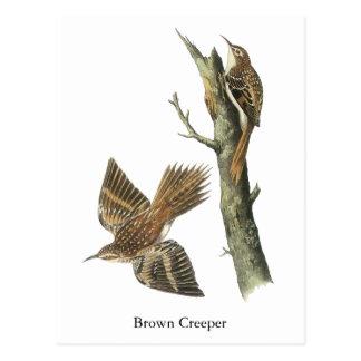 Enredadera de Brown, Juan Audubon Tarjeta Postal