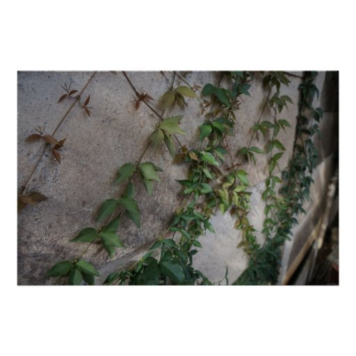 Enredadera de la fotografía de Nocturmia en una Póster