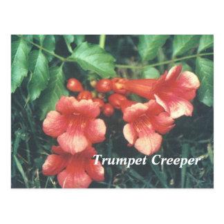 Enredadera de trompeta tarjetas postales
