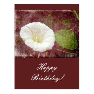 Enredadera del cumpleaños - correhuela perenne sal postales