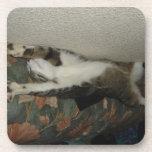 Enrollado cat