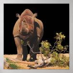 Ensalada del rinoceronte impresiones