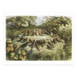 Ensayo del vintage en el Fairyland 1870 Postales
