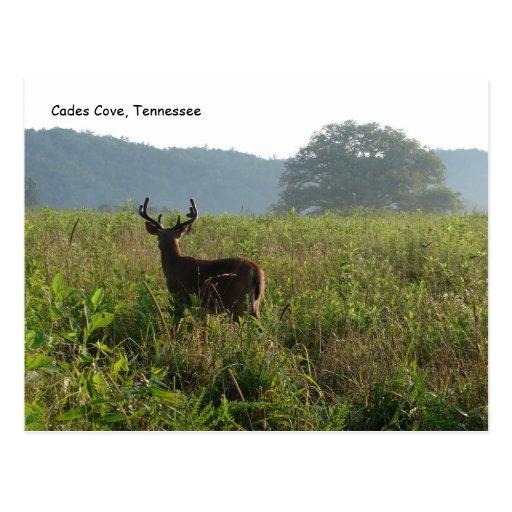 Ensenada de Cades, Tennessee Tarjeta Postal