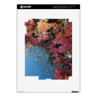 Enseñar a Basslets de hadas 2 iPad 3 Skins