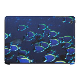 Enseñar el Surgeonfish de los azules claros Fundas De iPad Mini