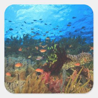 Enseñar los pescados de Anthias, isla de Wetar, Pegatina Cuadrada