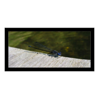 Enter the Dragonfly Print