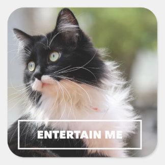 Entertain Me - Funny Cat Sticker