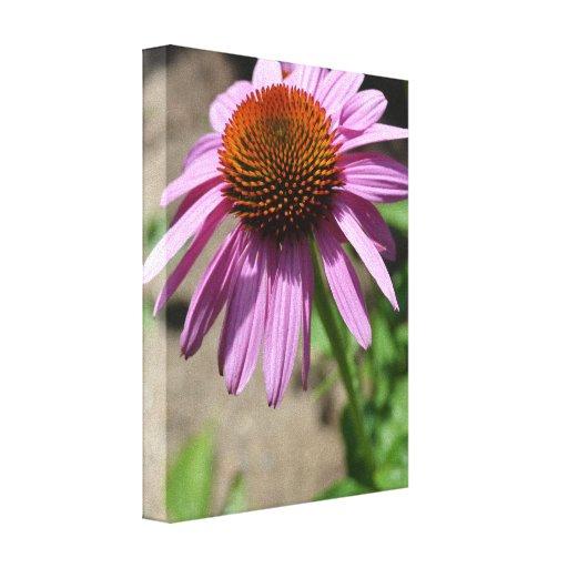 Enthusiasm Echinacea Canvas Print