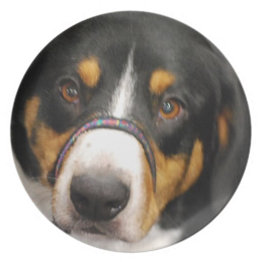 entlebucher-mountain-dog-1.jpg party plates