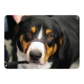 Entlebucher Mountain Dog 5x7 Paper Invitation Card