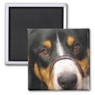 Entlebucher Mountain Dog Magnet Magnet
