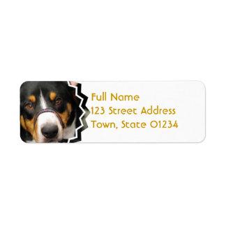 Entlebucher Mountain Dog Mailing Labels