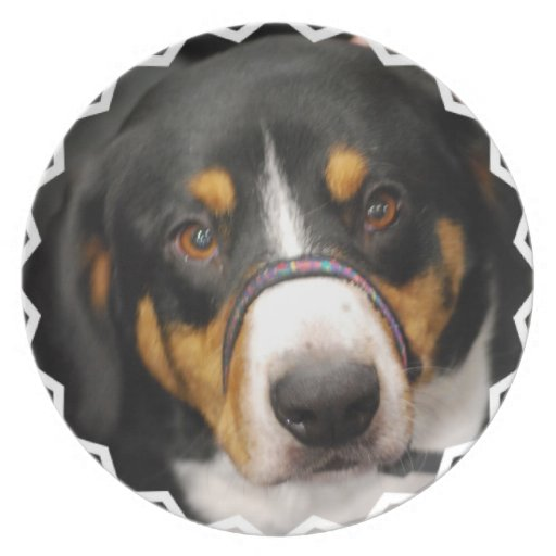 Entlebucher Mountain Dog Plate