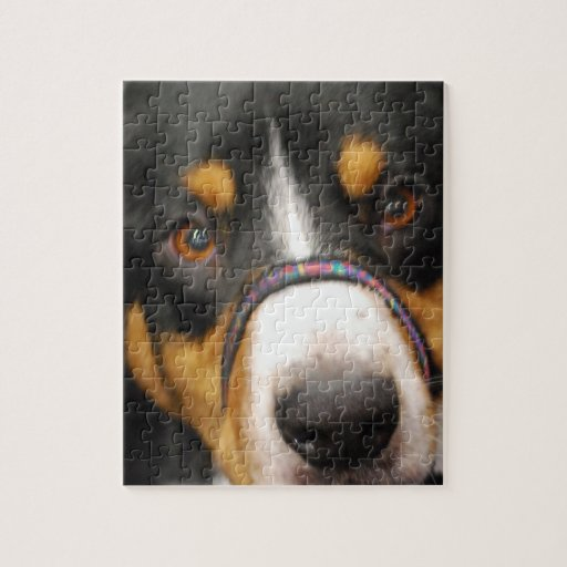 Entlebucher Mountain Dog Puzzle