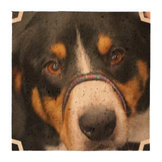 Entlebucher Mountain Dog Drink Coaster