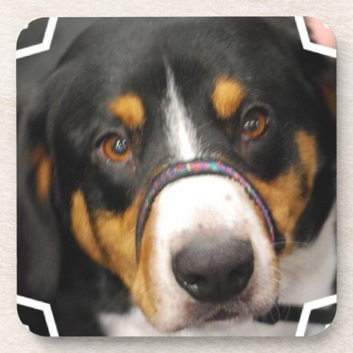 Entlebucher Mountain Dog Set of Six Coasters