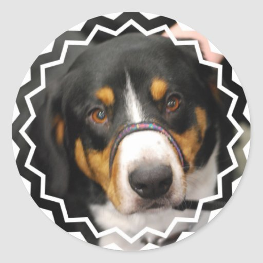 Entlebucher Mountain Dog Stickers
