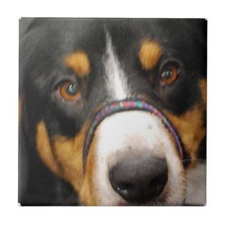 Entlebucher Mountain Dog Tile