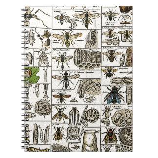 Entomología del vintage libros de apuntes