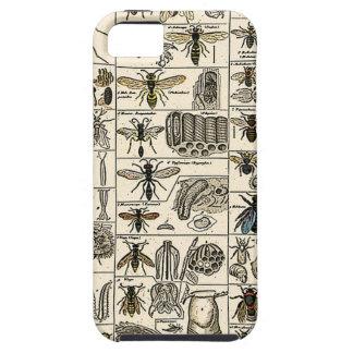 Entomología del vintage iPhone 5 carcasas