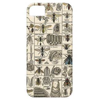 Entomología del vintage iPhone 5 funda