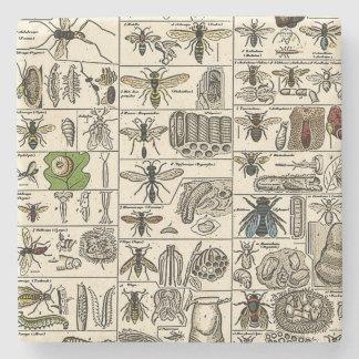 Entomología del vintage posavasos de piedra