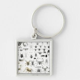 Entomología, miriápodos y arácnidos llavero cuadrado plateado