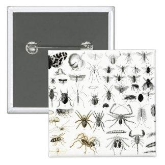 Entomología, miriápodos y arácnidos pin cuadrado