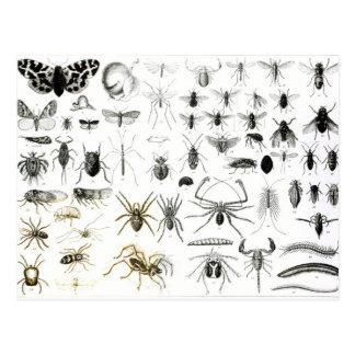 Entomología, miriápodos y arácnidos postales
