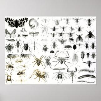 Entomología, miriápodos y arácnidos póster