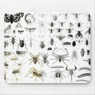 Entomología, miriápodos y arácnidos tapete de ratones