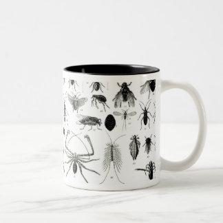 Entomología, miriápodos y arácnidos taza de dos tonos