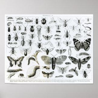 Entomología Impresiones