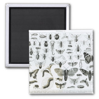 Entomology 2 Inch Square Magnet