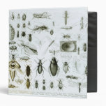 Entomology Insects 3 Ring Binders